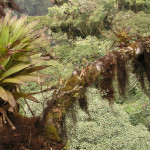 Article on epiphyte response to climate change published in F1000Research