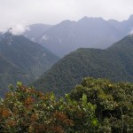 Microclimate and plant performance across an elevation gradient in the eastern Andes